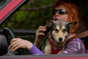 Driving-with-pet-on-lap